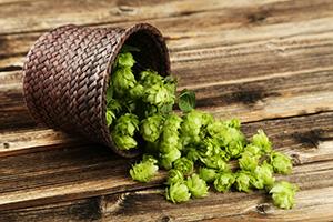 El Garrote - image of hops