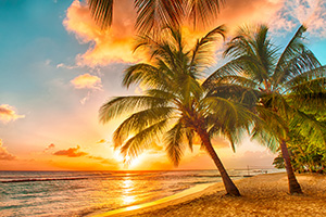 Kīkīao - image of tropical beach and palm trees
