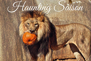 A lion with a pumpkin in it's mouth outside